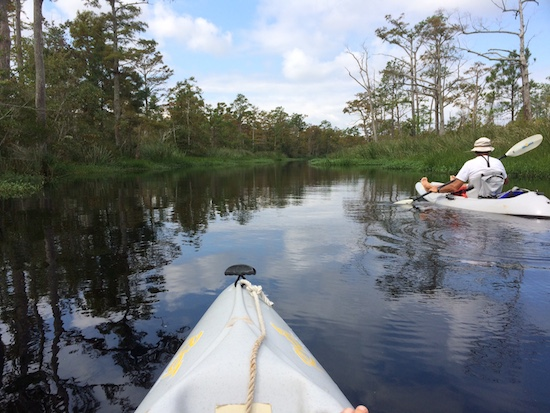Paddling a back creek in the Alligator River National Wildlife Refuse