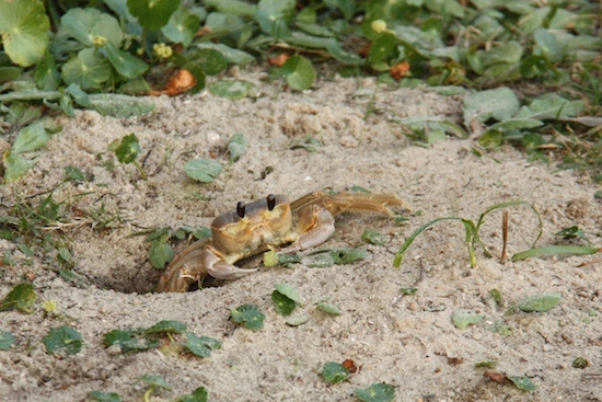 Our campsite has many friends ... here's one of my crabby buddies.