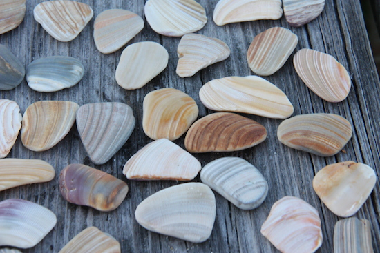 Collect polished shells -- almost like beach glass!