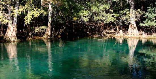Manatee Springs State Park … So Where Are the Manatees?