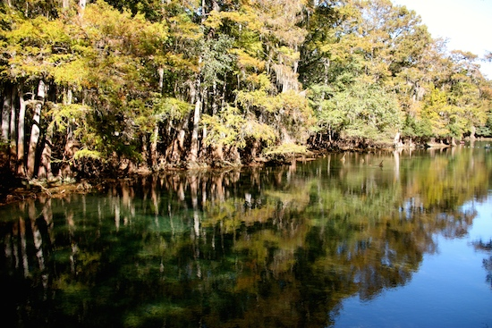 Reflections in Manatee Springs.