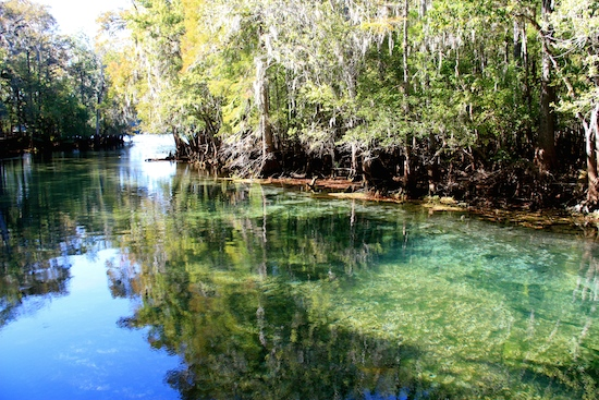 Manatee Springs State Park ... a first order spring, meaning the spring emits 50+ million gallons of fresh clear water daily.