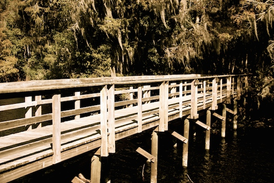 Don't miss the boardwalk from Manatee Springs to the Suwanee River.