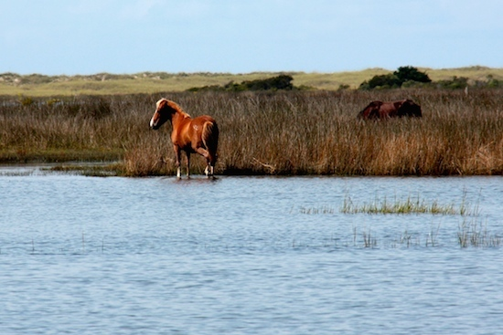 We saw a dozen wild horses just in our quick detour on our way to the lighthouse.