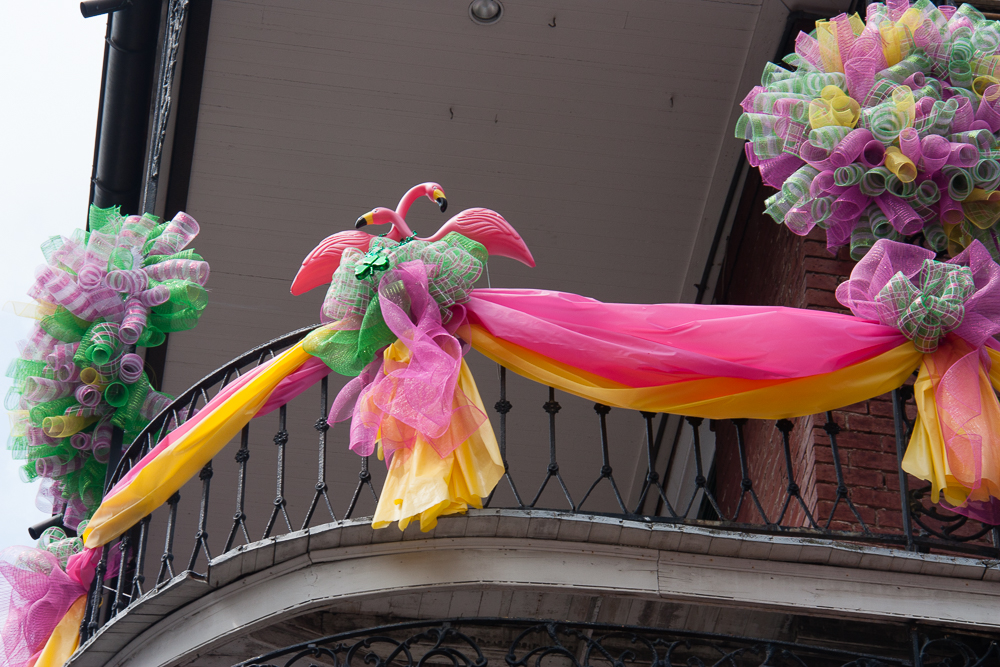 Flamingos in the French Quarter