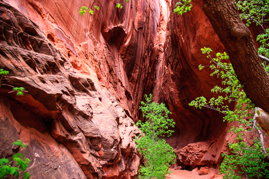 Driving Burr Trail, we found a little known slot canyon that was fun to explore in itself.