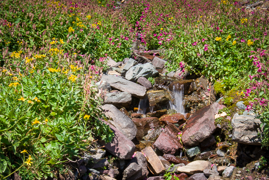 Streams and wildflowers were also an advantage of this hike, as they were on all our hikes.