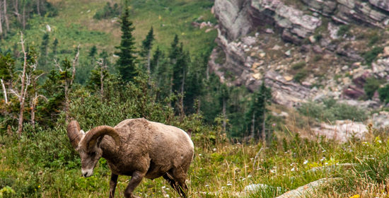 12 Tips to Spot More Wildlife